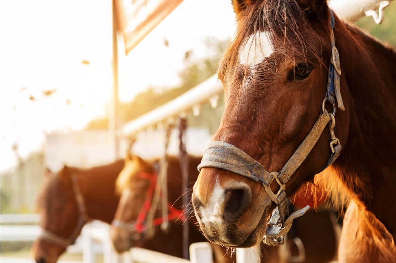 Equestrian Club of Northern Greece-Club History-AlphaDrive